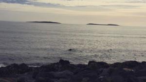 The Saltees Islands